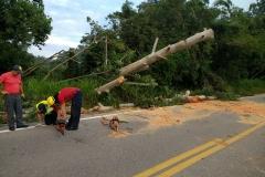 Corpo de Bombeiros realizou corte de árvore na rodovia Ivo Silveira (Foto: Divulgação)