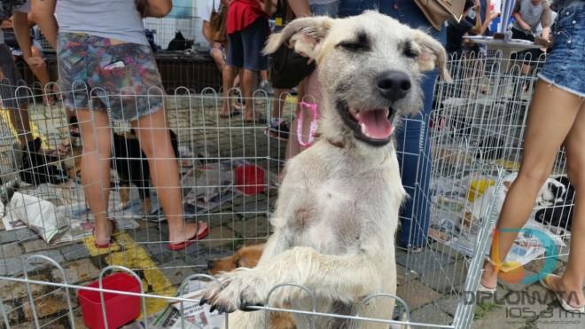 Cão em feirinha da Acapra