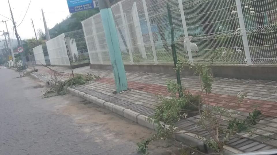 Árvores de calçada são arrancadas no bairro Guabiruba Sul; Prefeitura lamenta