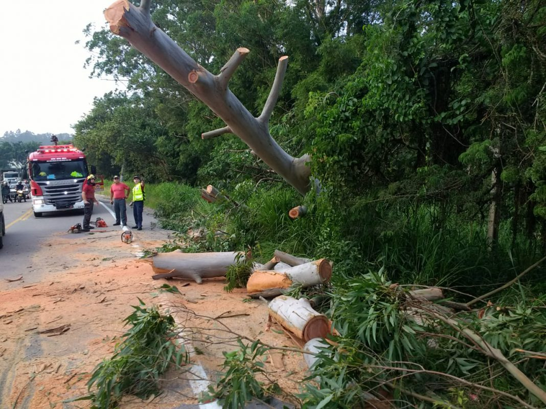 Queda de árvore na rodovia Ivo Silveira
