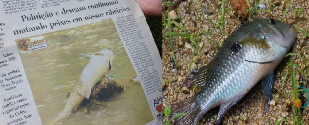 Ribeirões: históricos de denúncias, peixes mortos e indignação