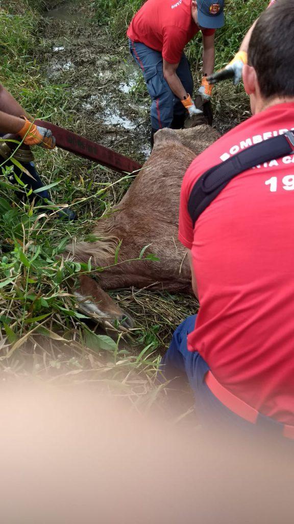 Uma égua foi resgatada com auxílio do Corpo de Bombeiros, após ser encontrada debilitada em um córrego (Foto: Corpo de Bombeiros)