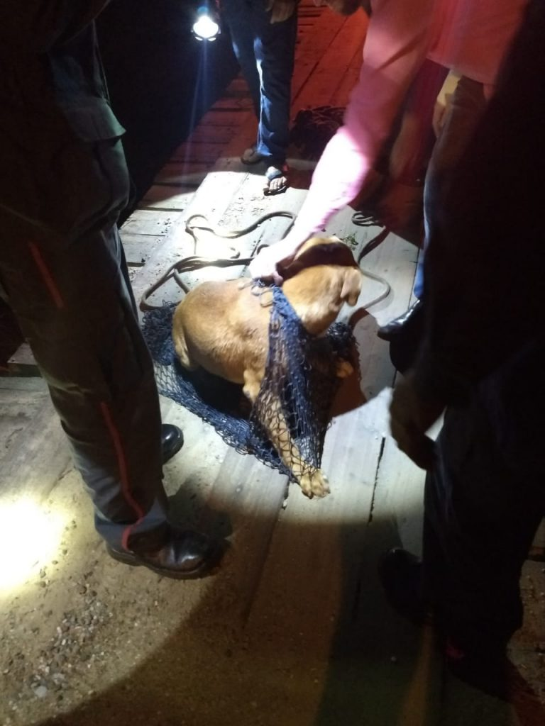 A queda do cão no rio ocorreu a rua Ernesto Schroerder, no bairro Limeira