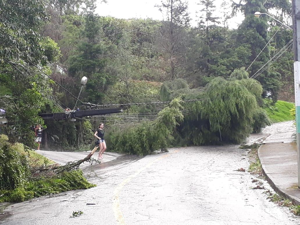 Vento provoca queda de árvores; ocorrências em andamento