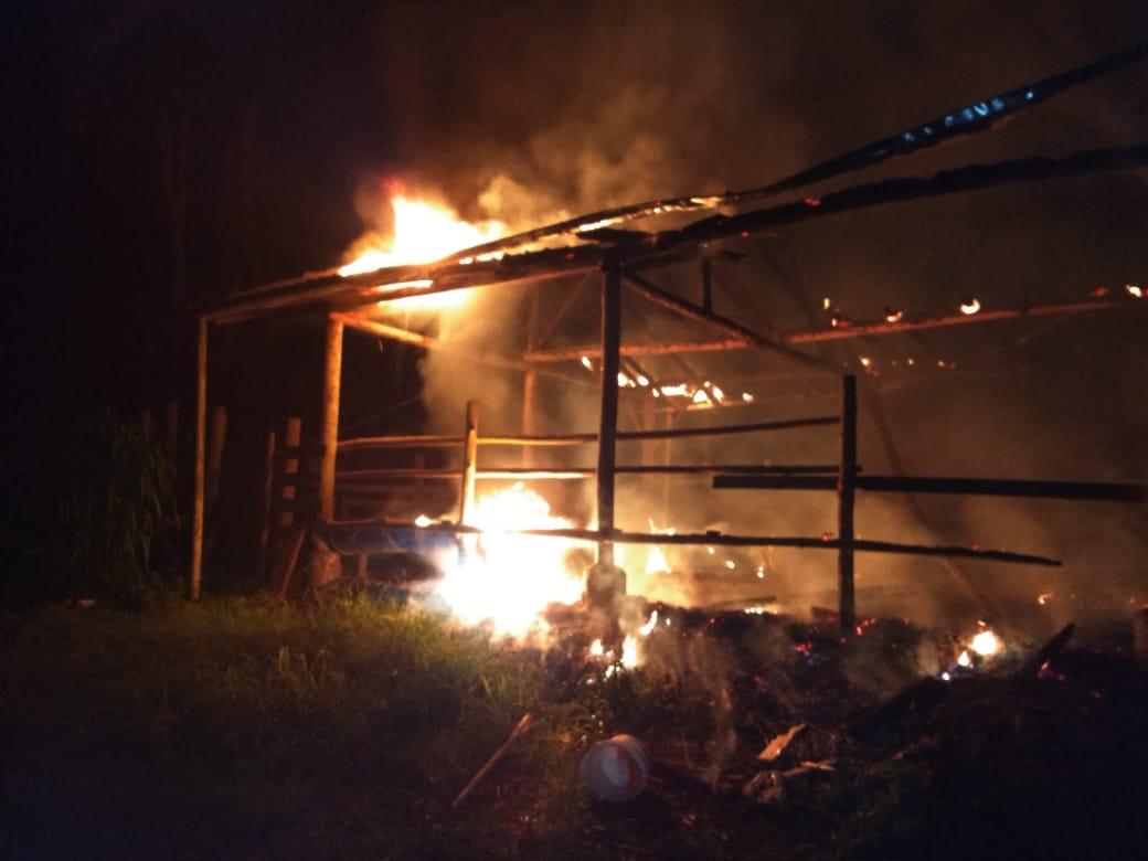 Galpão usado para abrigo de animais pega fogo