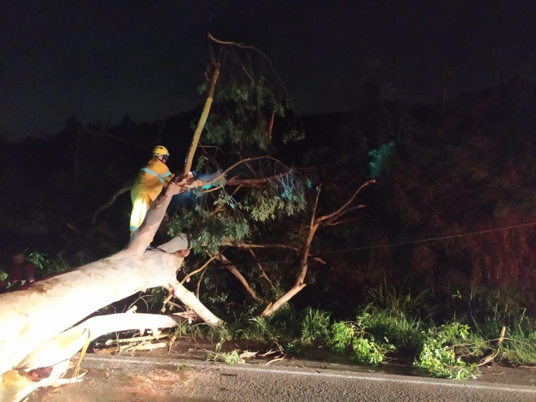 Corpo de Bombeiros foi acionado para o corte de árvore na rodovia Ivo Silveira (Foto/CBM)