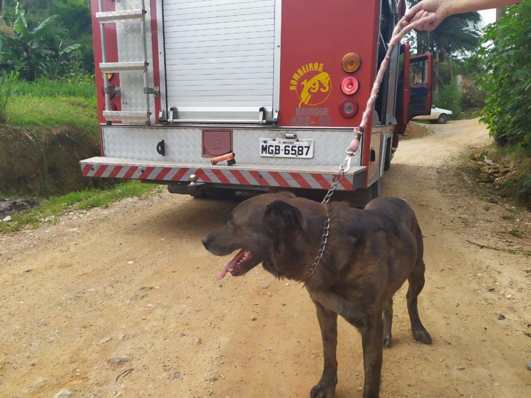 Cão labrador é resgatado pelo Corpo de Bombeiros (Foto: CBM/Divulgação)