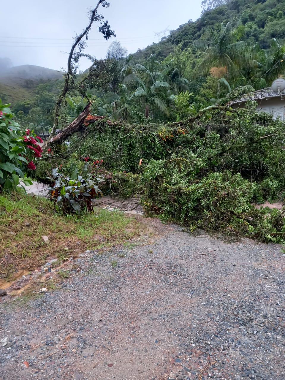 Árvore caiu no Ribeirão Tavares, bairro Limeira, durante vendaval na madrugada desta quinta-feira (3)